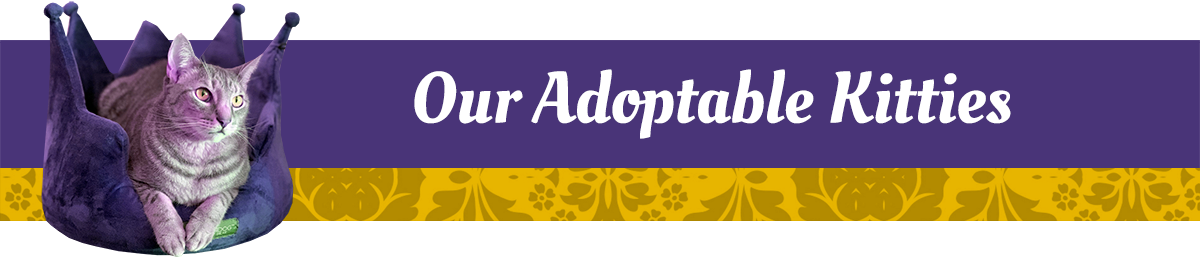 https://www.purrr.org/wp-content/uploads/2021/01/header-adoptablekitties.png