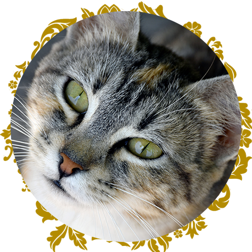 https://www.purrr.org/wp-content/uploads/2021/02/circle-bookclub.png