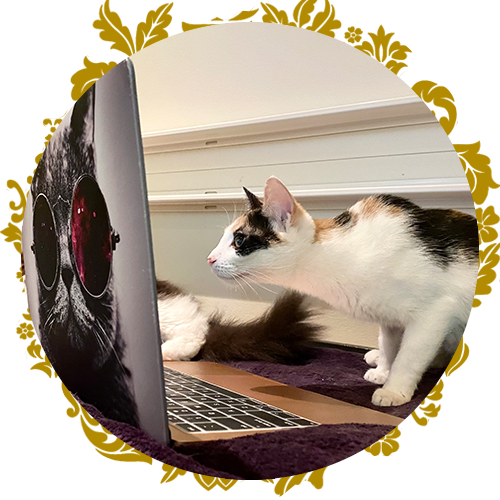 https://www.purrr.org/wp-content/uploads/2021/02/img-circle-donate-online.png