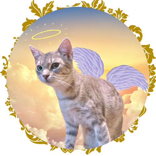 https://www.purrr.org/wp-content/uploads/2021/02/img-circle-petgrief.png